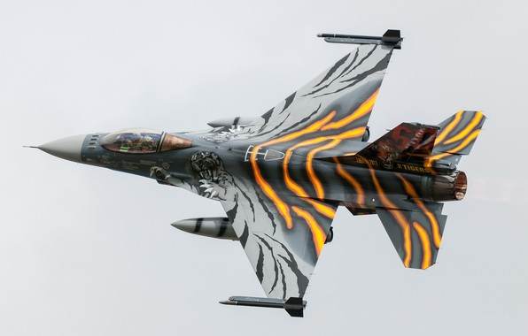 Picture tiger, tuning, combat aircraft, General Dynamics F-16AM Fighting Falcon
