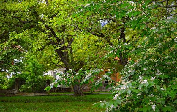 Picture Spring, Trees, Park, Park, Spring, Flowering, Trees, Flowering