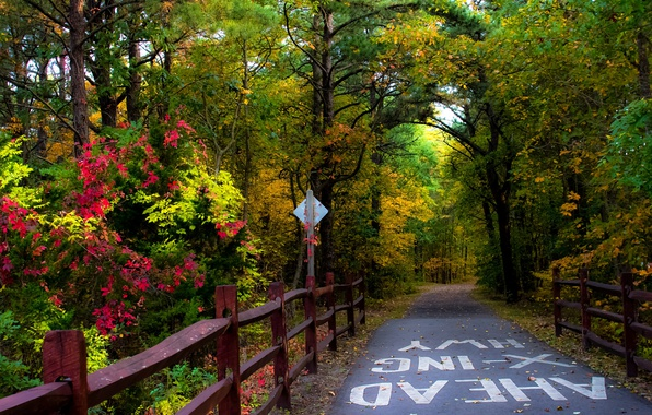 Picture Road, Autumn, Trees, Forest, Fall, Autumn, Colors, Road, Forest, Trees