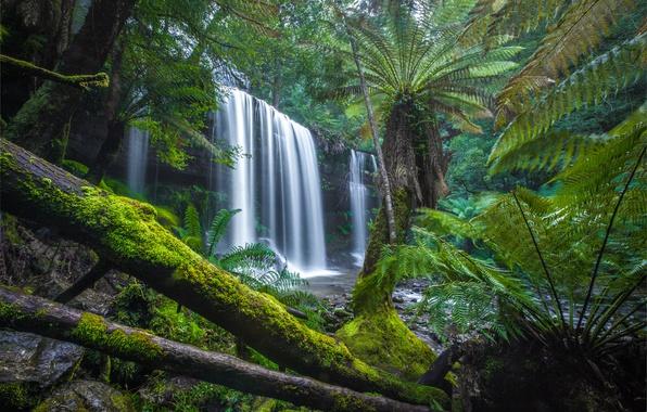Picture forest, waterfall, moss, Australia, fern, logs, Australia, Tasmania, Tasmania, Mount Field National Park, National Park ...