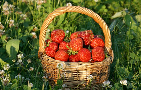 Picture grass, the sun, flowers, strawberry, berry, basket, red, basket