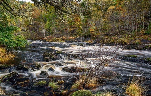 Picture landscape, nature, stream, beauty