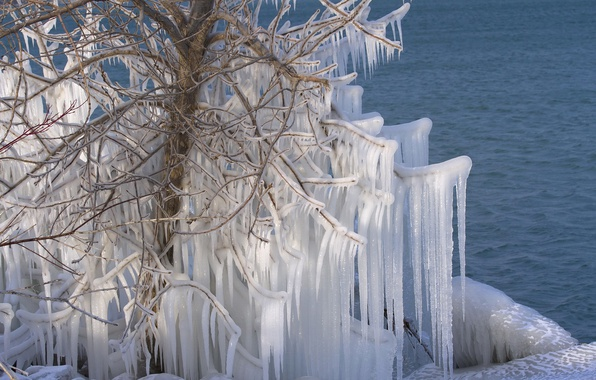 Picture water, tree, ice, icicles, Canada, Canada, Lake Ontario, lake Ontario