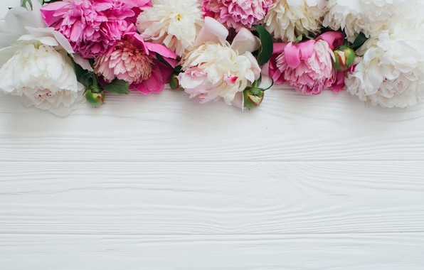 Wallpaper Flowers White Pink Peonies Wooden Background