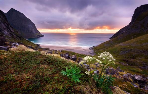Picture sea, beach, leaves, clouds, sunset, stones, rocks, hills, shore, vegetation, plant, the evening, horizon, surf