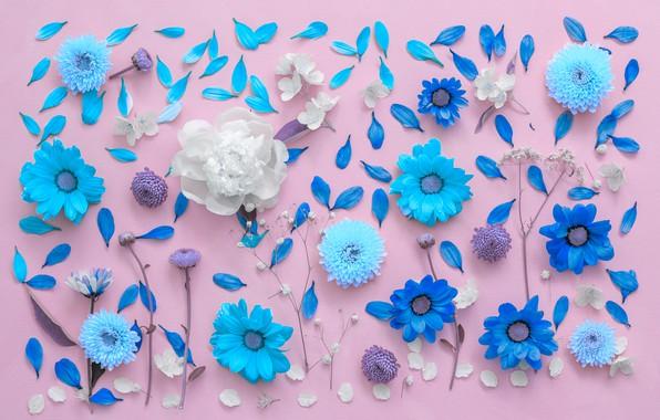 Wallpaper flowers, background, petals, chrysanthemum