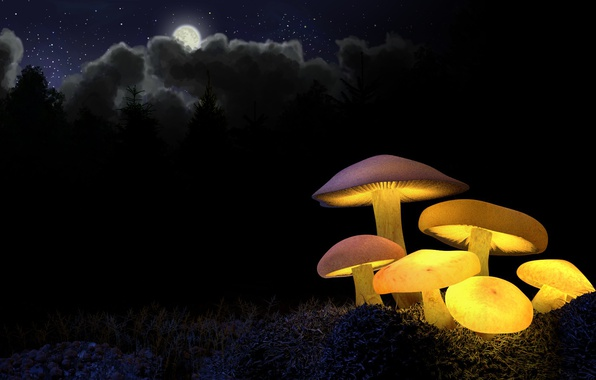Photo wallpaper forest, yellow, mushrooms, night, ate, the moon, glow, light