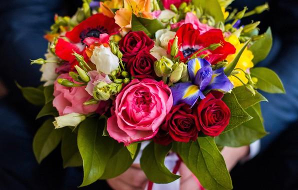 Picture roses, bouquet, irises, eustoma