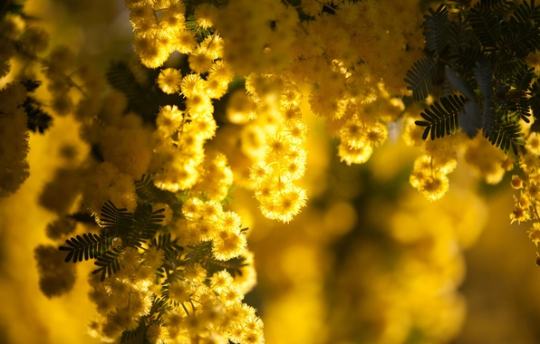 Wallpaper macro, flowers, branches, yellow background
