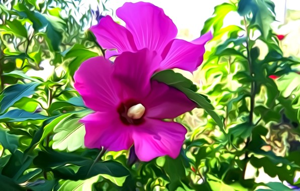 Picture greens, leaves, flowers, rendering, petals, clematis