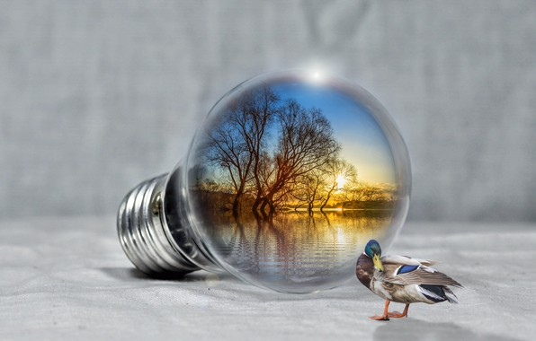 Picture light bulb, sunset, lake, relax, duck