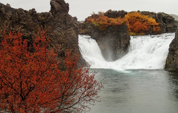 Photo wallpaper tree, autumn, Iceland, stream, waterfall, rocks, river
