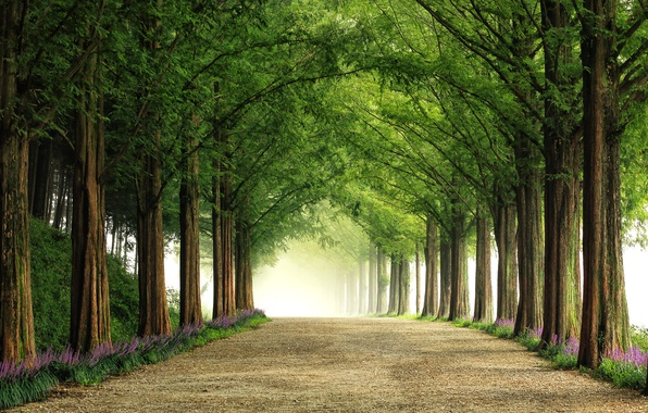 Picture road, trees, flowers, nature, alley