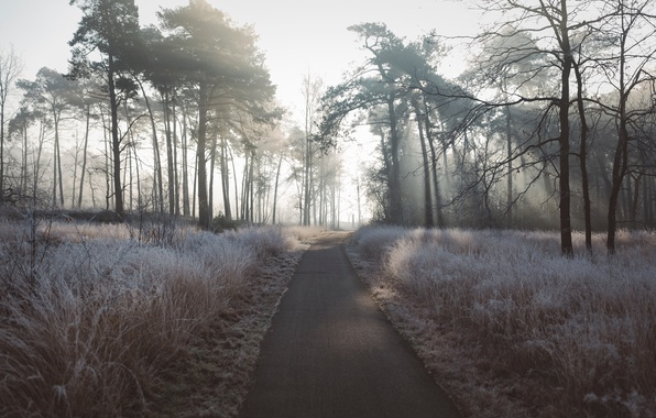 Picture frost, light, trees, nature, morning