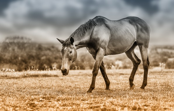 Picture field, the sky, look, face, clouds, horse, horse, treatment, pasture