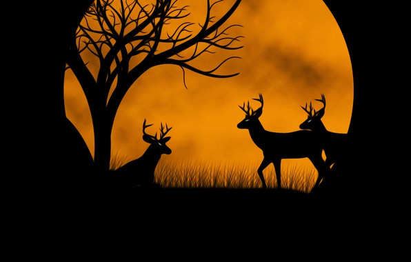 Picture the moon, deer, picture