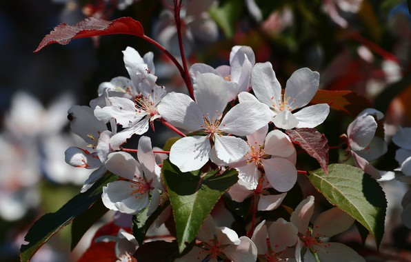 Picture flowers, nature, spring, flowering