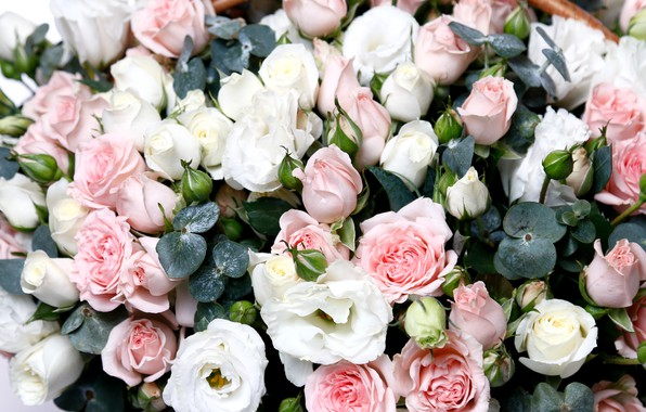 Picture roses, bunch, eustoma