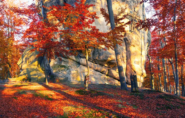 Picture autumn, forest, leaves, the sun, trees, stones, Ukraine, Transcarpathia