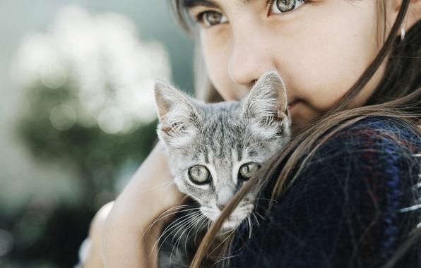 Picture cat, cat, look, girl, kitty, bokeh