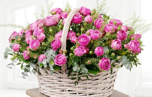 Wallpaper leaves, basket, roses, colorful, gentle, pink, buds, beautiful, Roses, lovely, basket ...