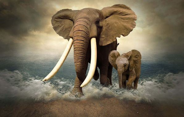 Picture sea, elephant, photoshop, elephants, tusks, elephant