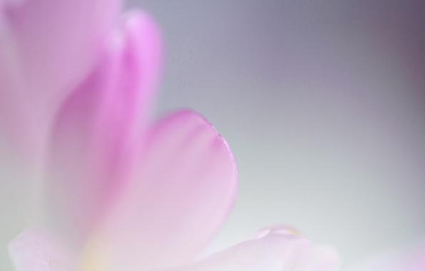 Picture flower, nature, paint, petals, kosmeya