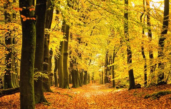 Picture autumn, forest, trees, Park