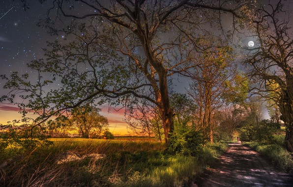 Picture trees, the moon, starry sky