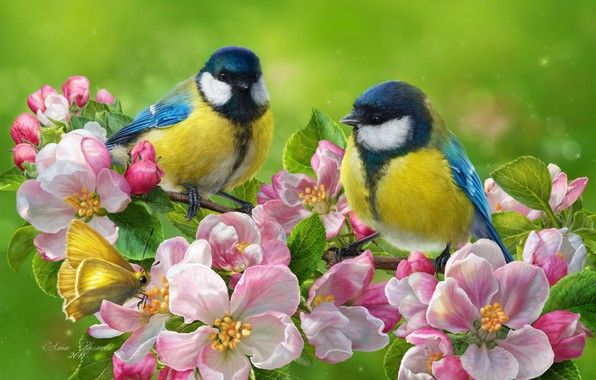 Picture birds, background, butterfly, photoshop, spring, a couple, flowering, flowers, tit, blue tit, branch of Apple
