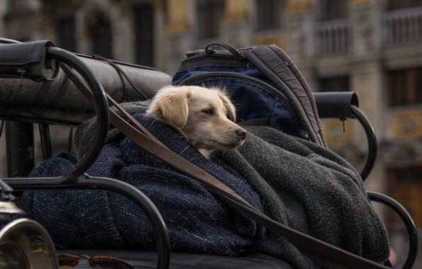 Picture cold, life, the city, each, loyalty, devotion, dog, care