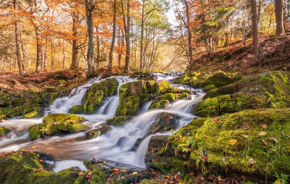 Picture autumn, forest, leaves, the sun, trees, stream, stones, moss, Germany, Harzgerode, Selkefall