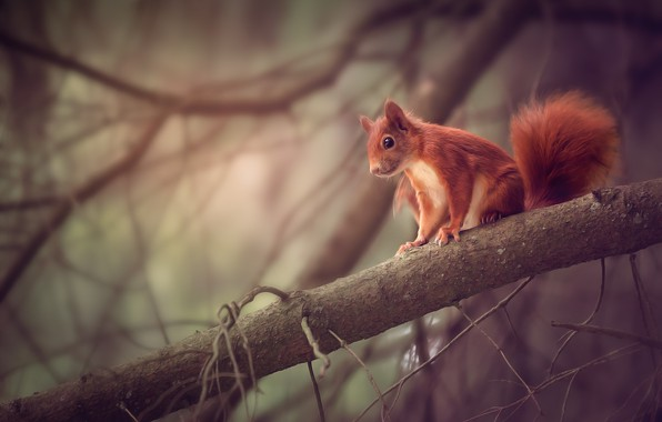 Picture branches, nature, animal, protein, rodent