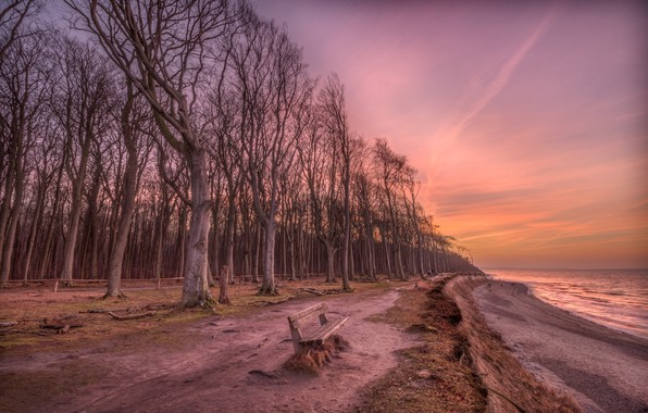 Picture sea, forest, trees, landscape, bench, nature, shore, the evening