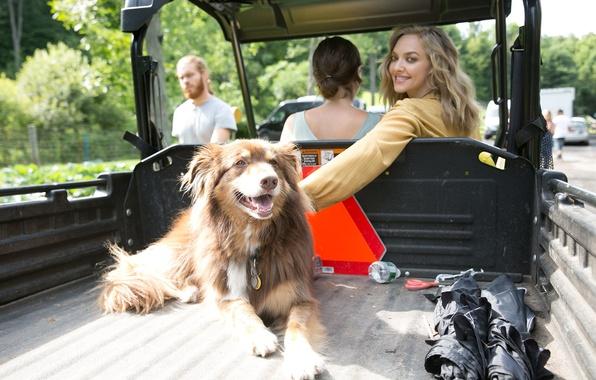 Picture auto, smile, dog, actress, blonde, body, Amanda Seyfried, Amanda Seifred, Allure, Scott Trindle