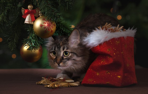 Picture cat, cat, balls, decoration, balls, toys, Christmas, New year, tree, bag