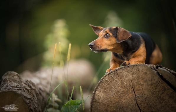 Picture grass, walk, dog
