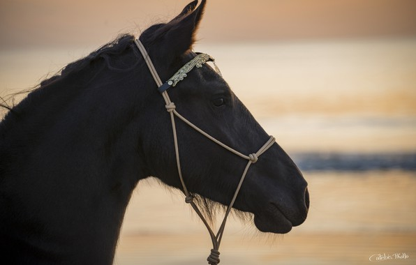 Picture face, light, sunset, horse, horse, profile, crow