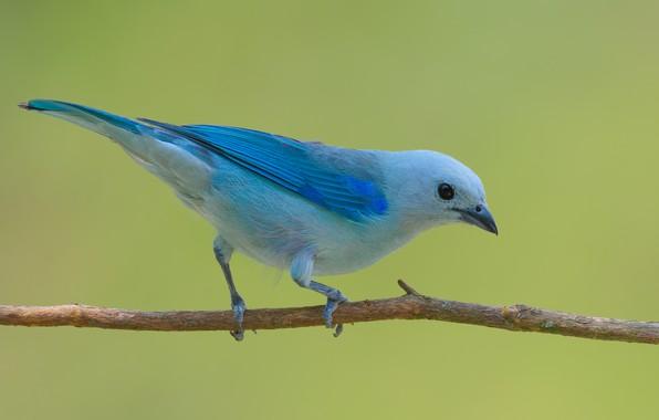 Picture bird, branch, sitting