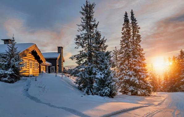 Picture cold, winter, forest, the sun, light, snow, houses, North
