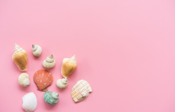 Picture background, pink, shell, pink, background, marine, seashells