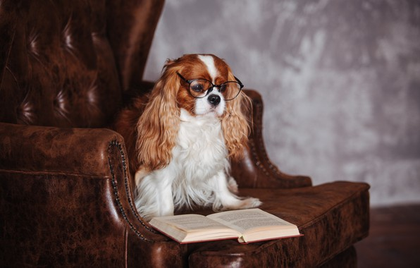 Picture chair, glasses, book, Spaniel