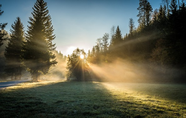 Picture forest, light, morning
