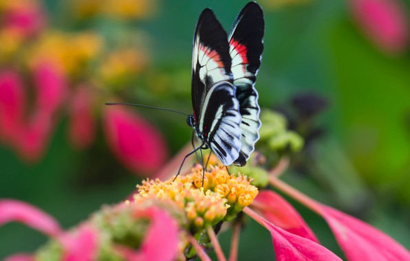 Picture flower, nature, butterfly, wings, petals
