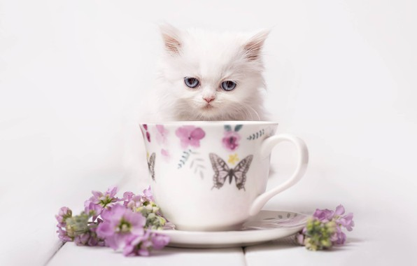 Picture look, flowers, background, muzzle, mug, kitty, white kitten