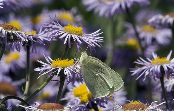 Picture flowers, butterfly, bokeh