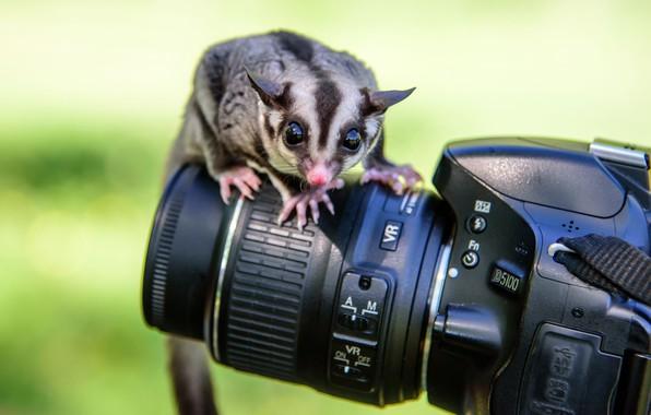 Picture animal, camera, the camera