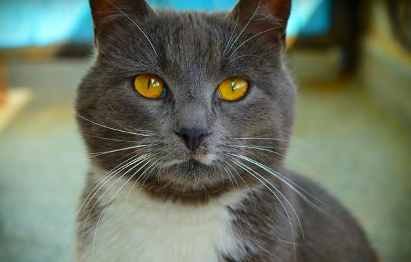 Picture Cat, Cat, Cat, Macro