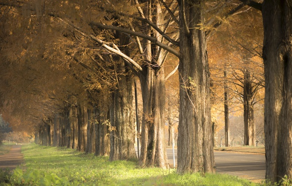 Picture autumn, trees, street