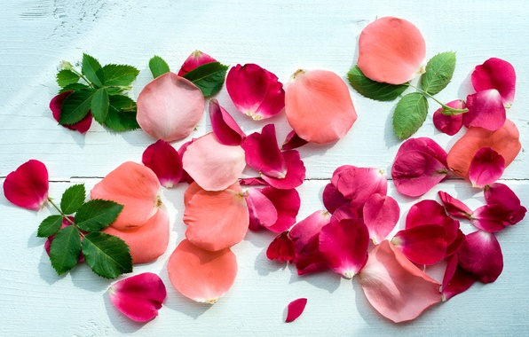 Picture petals, pink, petals, roses, pink roses